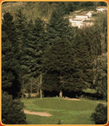 Welcome to PropertyGolfPortugal.com - vidago -  - Portugal Golf Courses Information - vidago